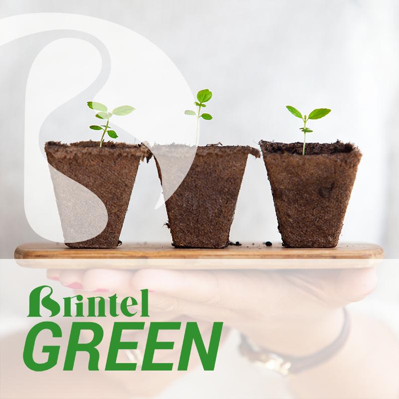 brintel green presentaciñon ecologico segubda vida